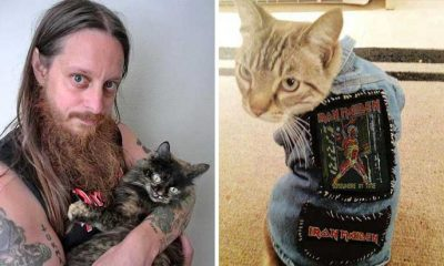 gatos metal